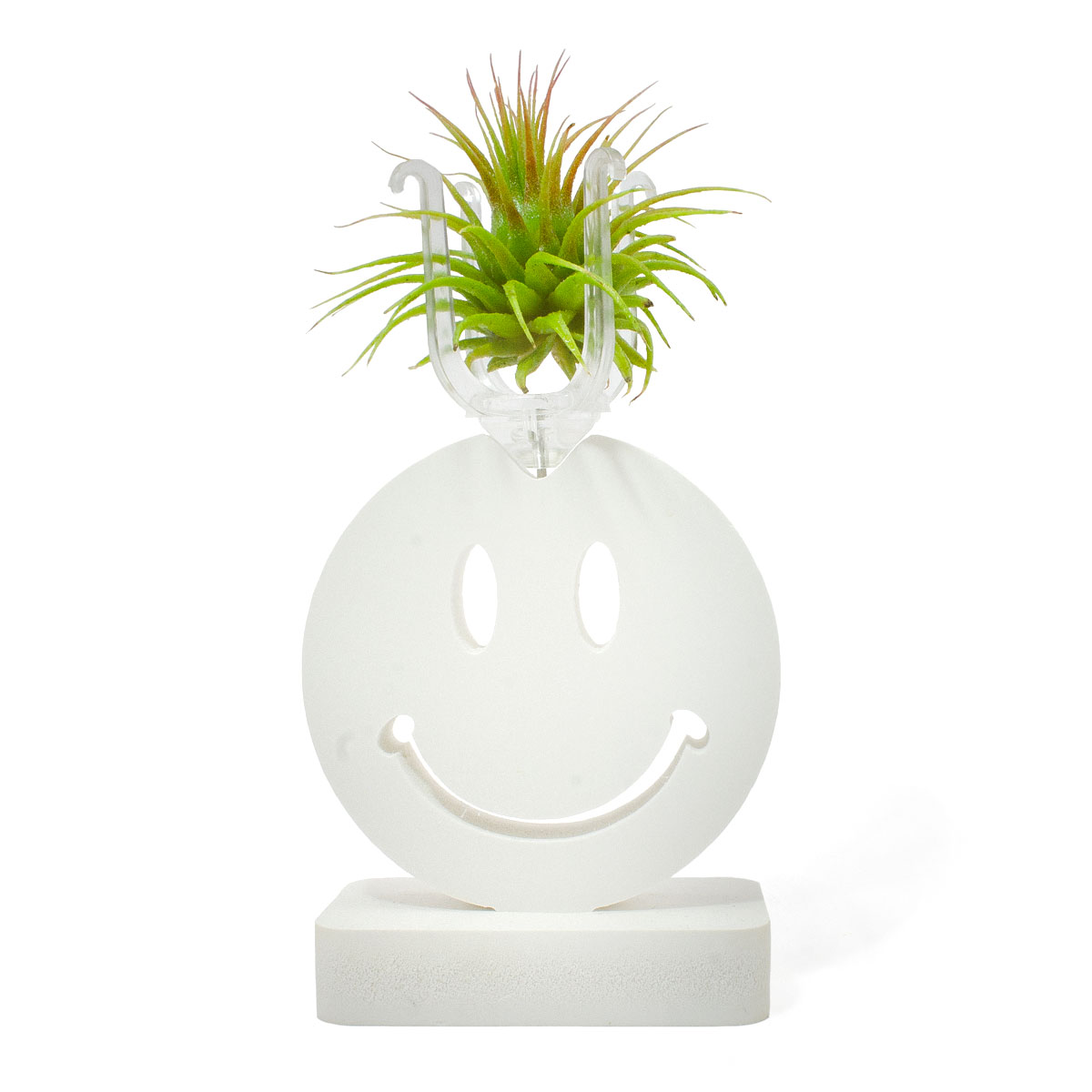 Smiling Face Expression One + Ionantha Guatemala
